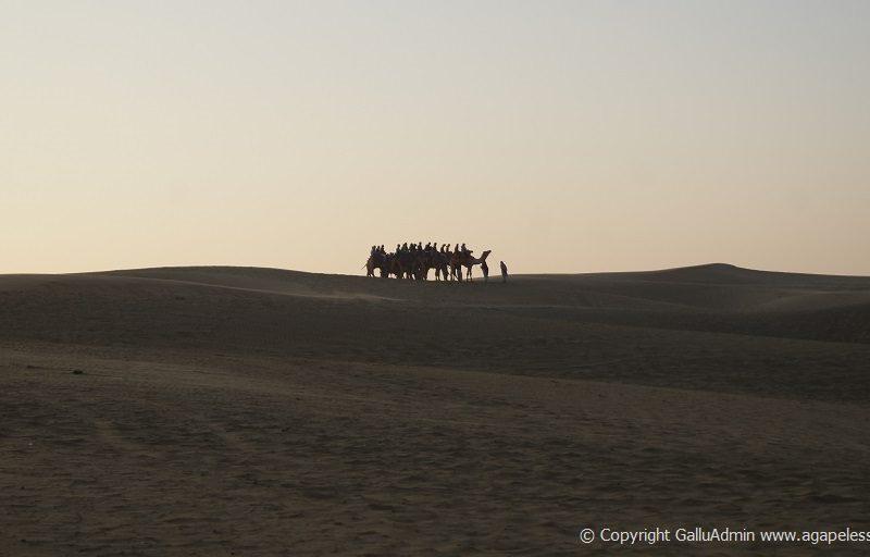 sunrise camel group