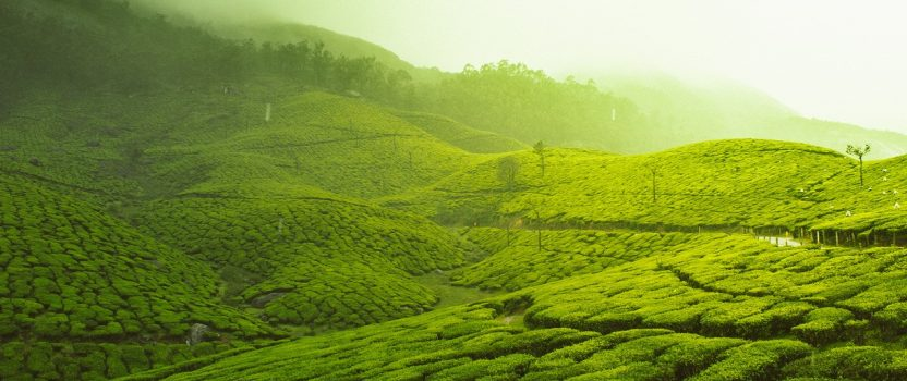 Kerala: Goodness of Nature