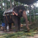 Elephant Thekkady
