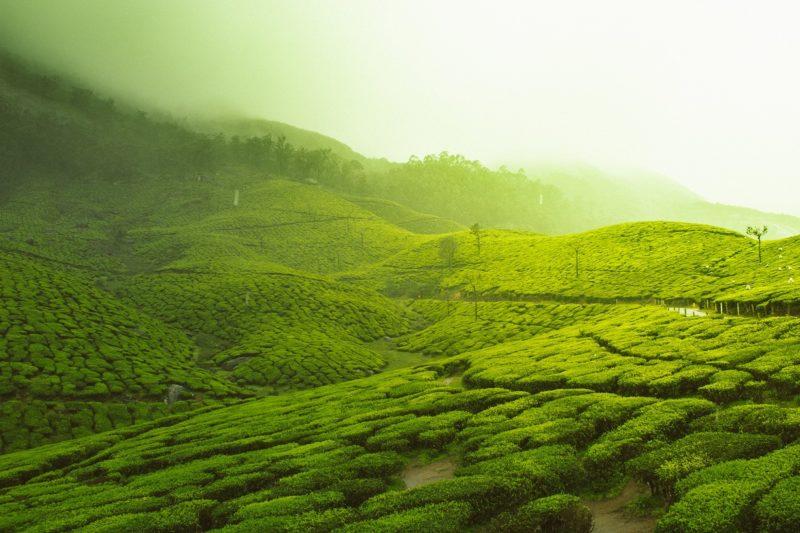 Kerala best hotels