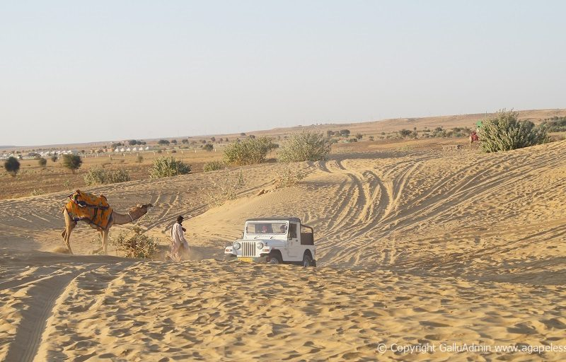 camel and jeep