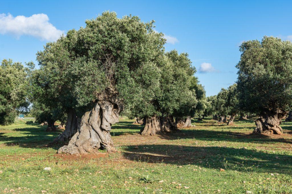 Salento – Puglia